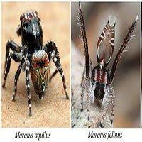 Kinh ngạc về 3 loài nhện
