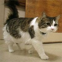 Kỳ lạ chú mèo có khả năng