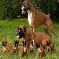 Kỳ thú loài chó thích sử dụng 2 chân trước như võ sĩ