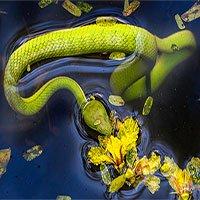 Lạc giữa vương quốc rắn ở Việt Nam, đủ loại từ hiền đến kịch độc