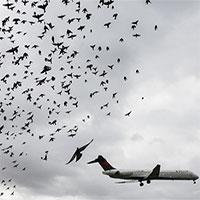 Làm cách nào ngăn chim trời tấn công