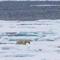Lần đầu tiên sau 100.000 năm, băng tại Bắc Cực có thể tan chảy hoàn toàn