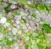 Lào Cai lại hứng mưa đá lớn