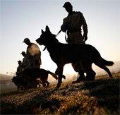 Lịch sử loài chó và nền văn minh châu Mỹ