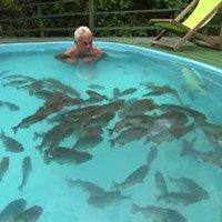Liều mạng xuống hồ bơi với 100 con