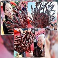 Linh chi nhung hươu nghìn năm ở Trung Quốc