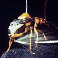 Loài bọ này đích thực là những kẻ