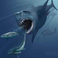 Loài cá mập dài bằng xe ôtô từng tung hoành trong đại dương