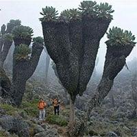 Loại cây kỳ lạ