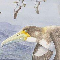 Loài chim cổ nhất thế giới vừa được phát hiện ở New Zealand