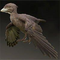 Loài chim nguyên thủy cùng thời khủng long