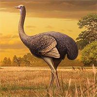 Loài chim thời tiền sử nặng nửa tấn và cao 3,5m
