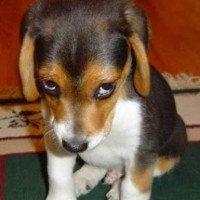 Loài chó tránh bị con người trút giận như thế nào?