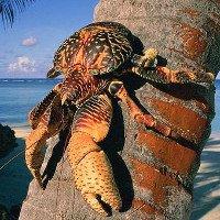 Loài cua khổng lồ nặng tới 4kg