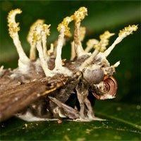 Loại nấm kí sinh này sẽ là tương lai mới cho ngành nông nghiệp