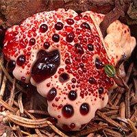 Loại nấm kỳ lạ nhìn rợn người nhưng không độc, lại có tác dụng bất ngờ