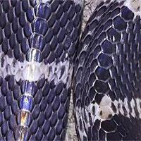 Loài rắn độc nhất Trung Quốc: 1 miligam nọc là đủ giết người, hổ mang chúa cũng phải khiếp sợ