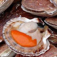 Loài sò Saint-Jacques sở hữu