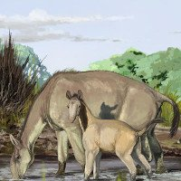 Loài thú từng làm cha đẻ thuyết tiến hóa bối rối