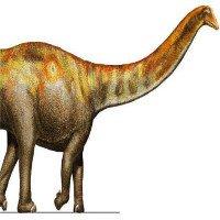 Loài vật đẩy lui khủng long ăn thịt chỉ bằng cú quật đuôi