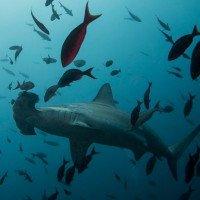 Lượng oxy trong nước biển đang giảm xuống đáng kể
