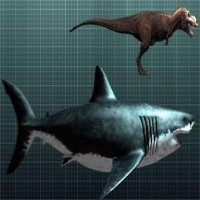 Lý do khó đỡ khiến cá mập Megalodon tuyệt chủng