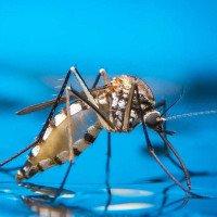 Lý do kinh dị khiến vết muỗi cắn trở nên cực ngứa mà khoa học mới tìm ra