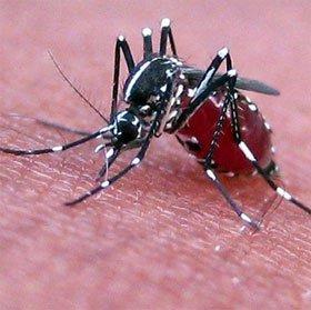 Lý giải mới về chuyện muỗi không thể lây nhiễm HIV