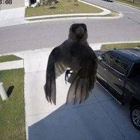 Ma thuật nào đã giúp con chim này trôi lơ lửng mà chẳng cần vỗ cánh?