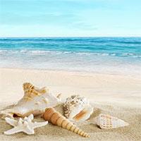 Mầm bệnh tiềm ẩn từ cát biển