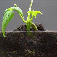 Mãn nhãn với cảnh timelapse từ lúc hạt mầm dưới đất cho tới khi mọc thành cây
