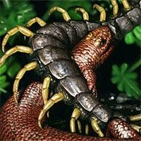 Mẫu hóa thạch tiết lộ tập tính đào bới đất của loài khủng long nhỏ