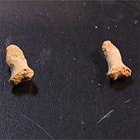 Mẩu xương 115.000 năm của bé gái bị chim tiền sử ăn thịt