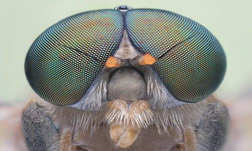 Máy bay không người lái lấy cảm hứng từ mắt kép của côn trùng