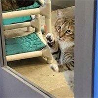 Mèo bị biệt giam vì chuyên dắt đồng loại trốn trại
