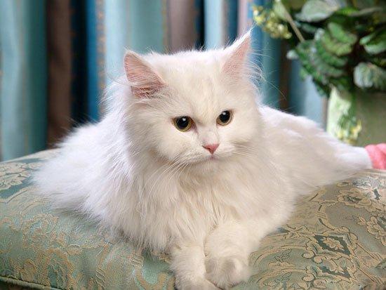 Mèo có thể là nguyên nhân gây ung thư