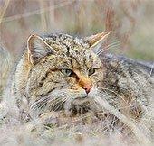 Mèo được thuần hóa từ thời cổ đại