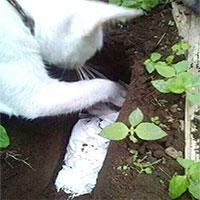 Mèo mẹ tự đào hố chôn mèo con gây xúc động