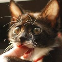 Mèo nhà gặm xác người: Tưởng là chuyện kinh dị nhưng có thật!