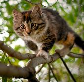 Mèo - sát thủ hàng loạt trong thế giới động vật