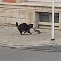 Mèo sợ hãi chạy trốn chuột trên phố