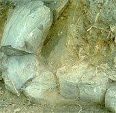 Mexico phát hiện ngà voi 10.000 năm trước Công nguyên