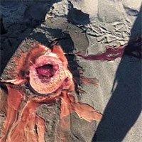 Mồ chôn cá voi sủi bọt đỏ như máu