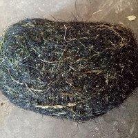 Mổ con lợn 2 tạ, phát hiện vật thể nghi là cát lợn quý hiếm nặng gần 1kg