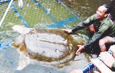 Mở rộng bể điều dưỡng cho Rùa Hồ Gươm