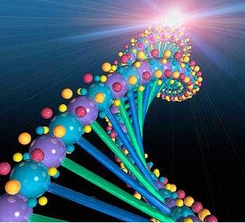 Mối quan hệ hợp tác trong việc nghiên cứu bộ gen người