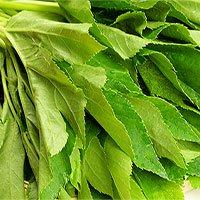 Món rau của các samurai chứa bí mật trường sinh