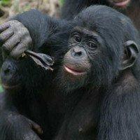 Một số loài vật lịch sự hơn... người khi giao tiếp