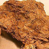 Một trong những bí ẩn lớn nhất của loài người đã được giải đáp từ... cục phân 14.000 năm tuổi