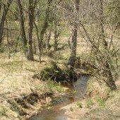 Mùa xuân có thể đến sớm hơn với rừng Bắc Mỹ làm tăng hấp thụ khí CO2